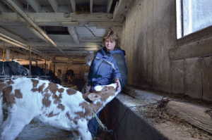 Carol tends to her cows